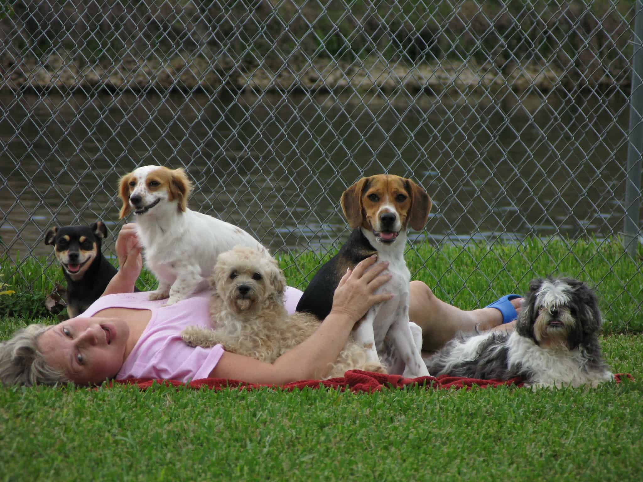 lady with lots of dogs