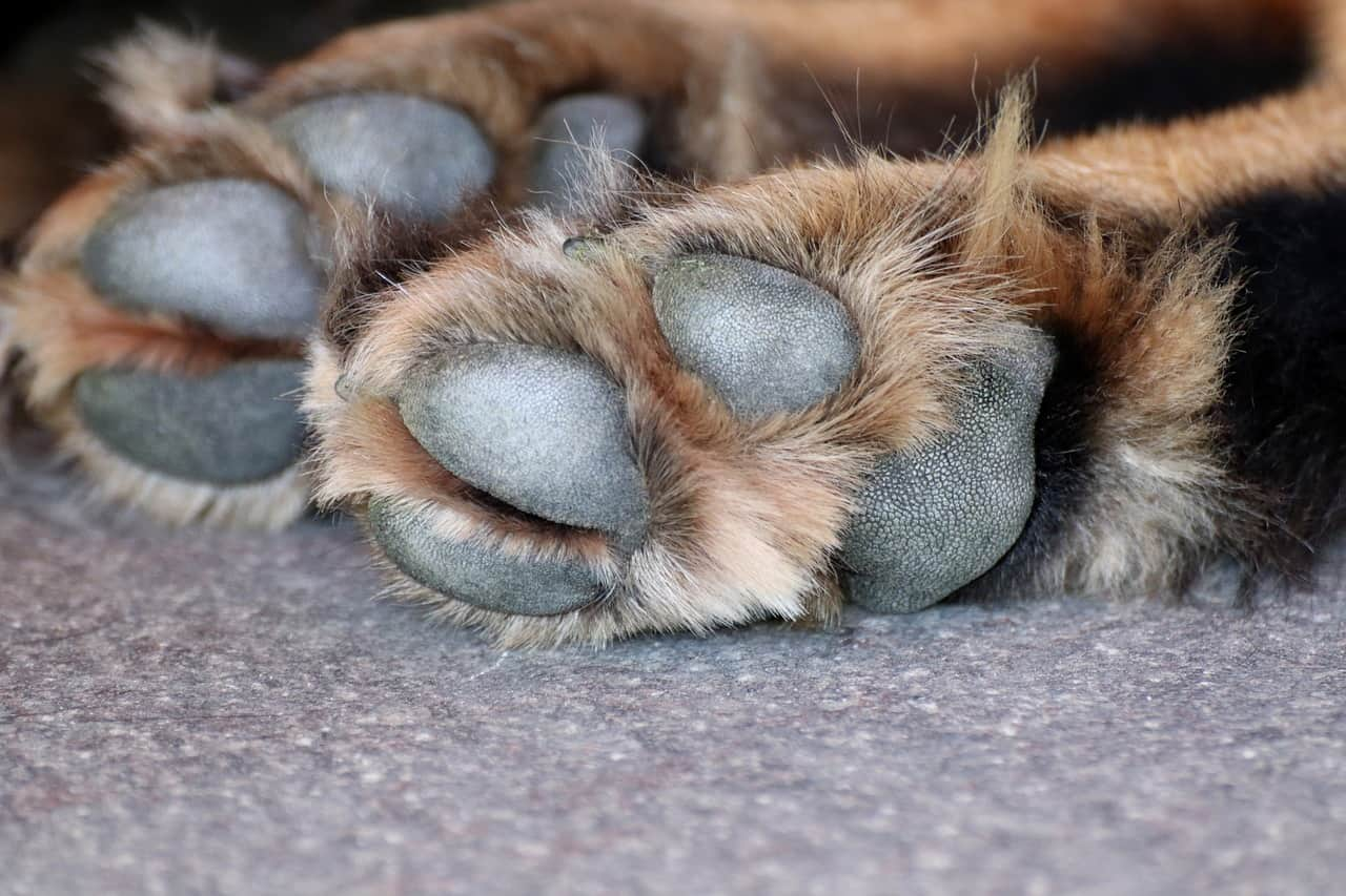 A guide to paw pad hyperkeratosis