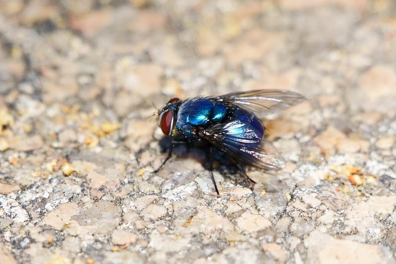 fly on ground