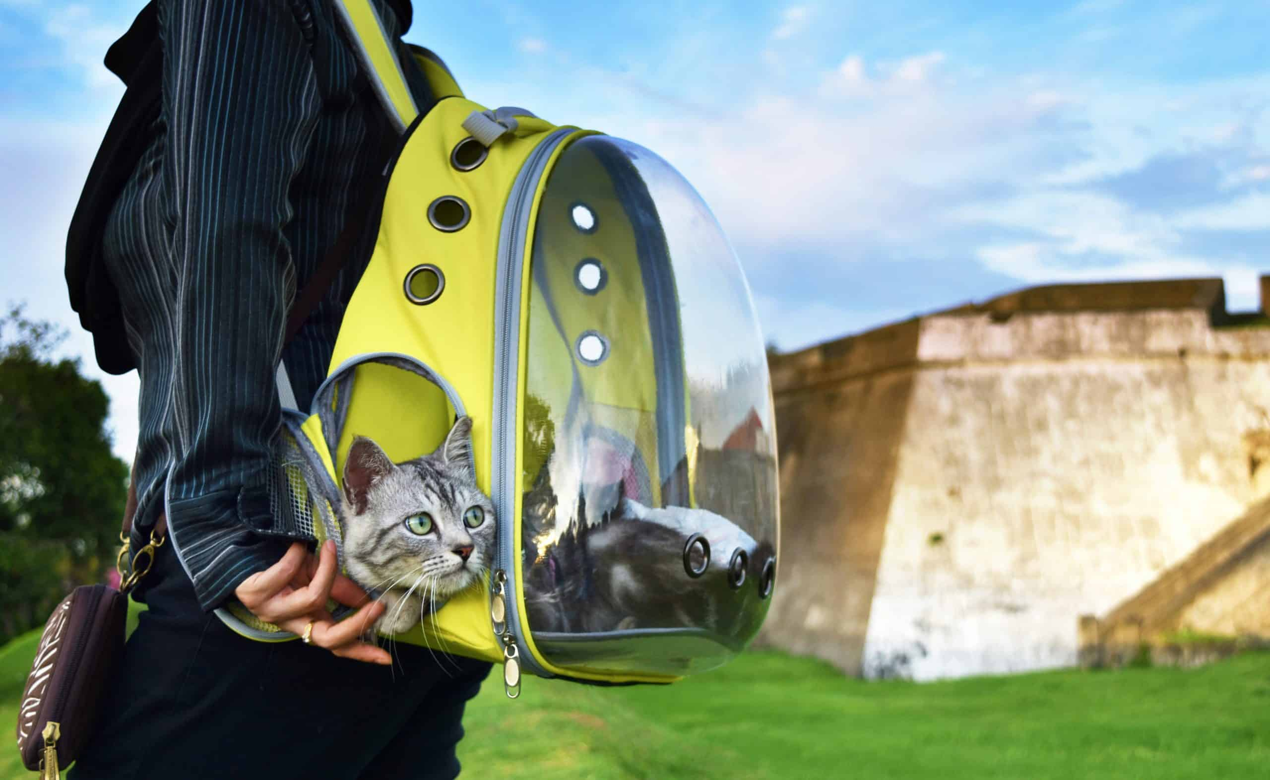 Young woman and a cat traveling with transparent backpack carrier on the park. Traveling with pet concept.