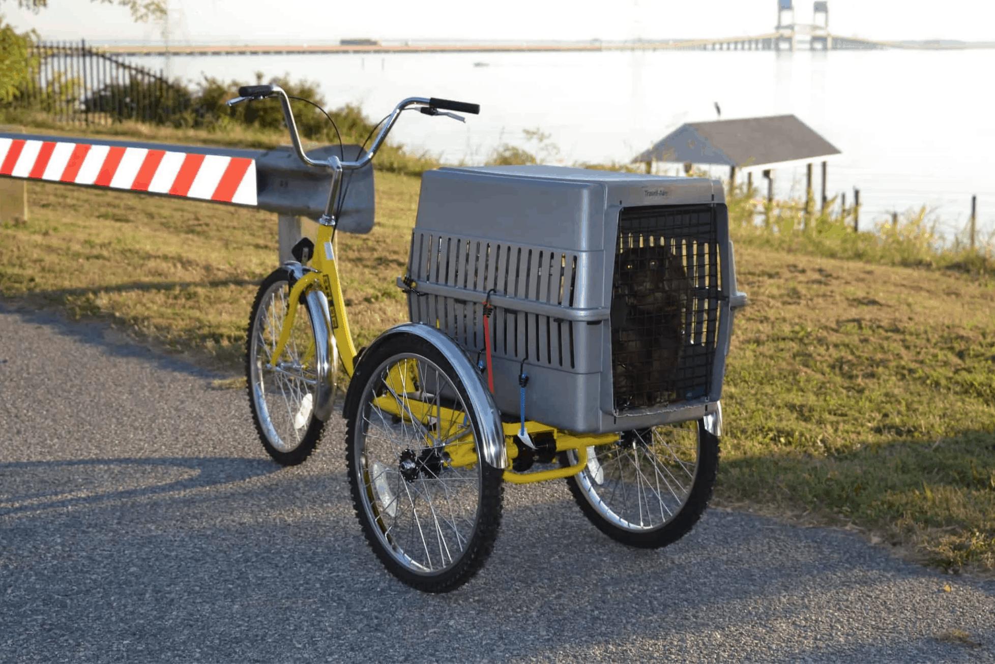 dog in crate on bike