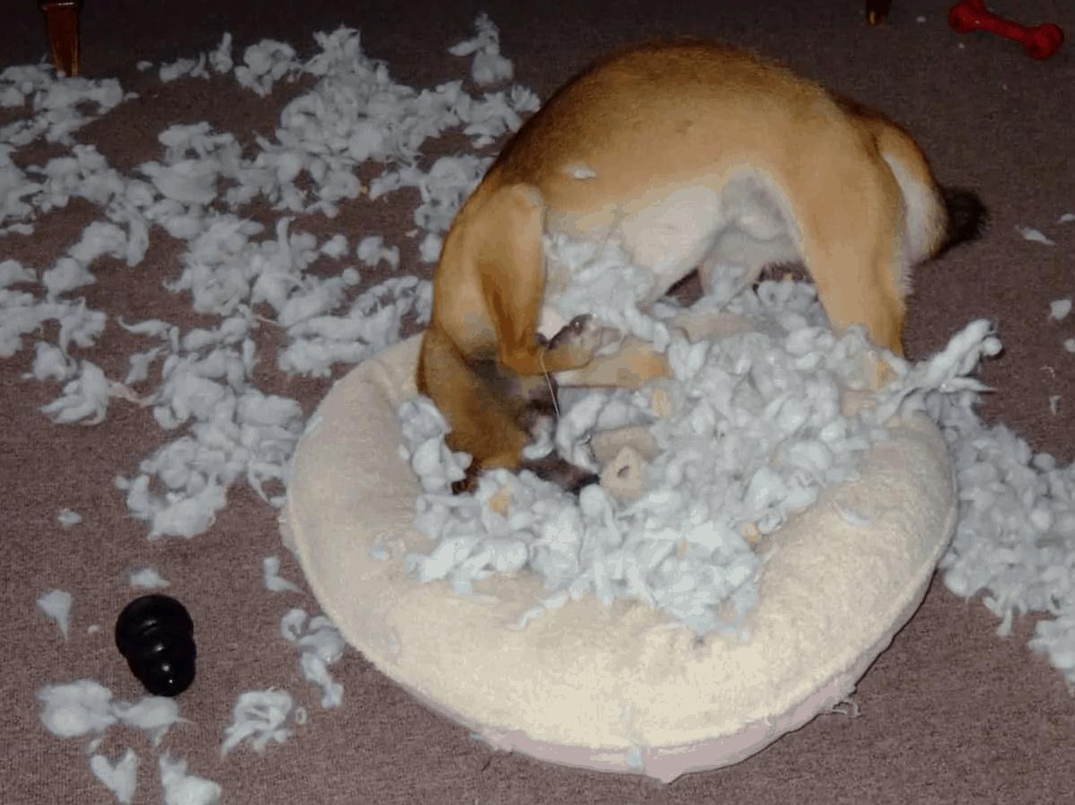 dog shredding bed