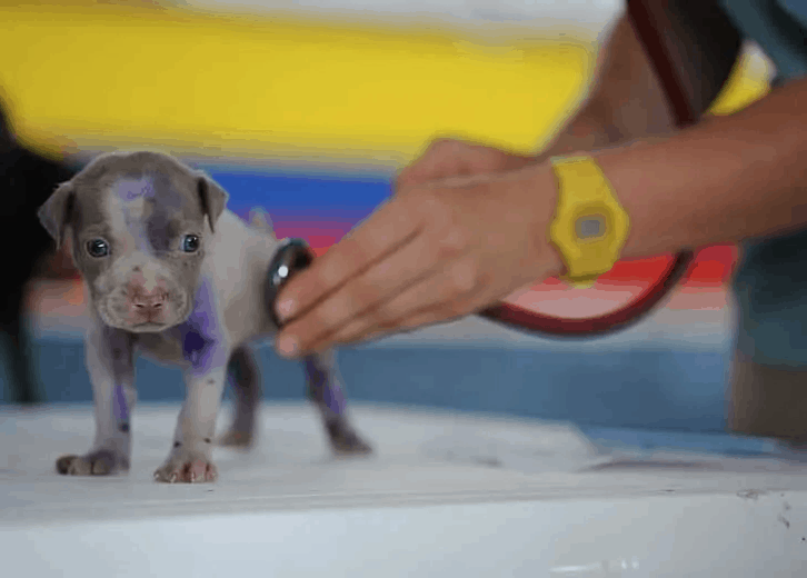 puppy getting a checkup
