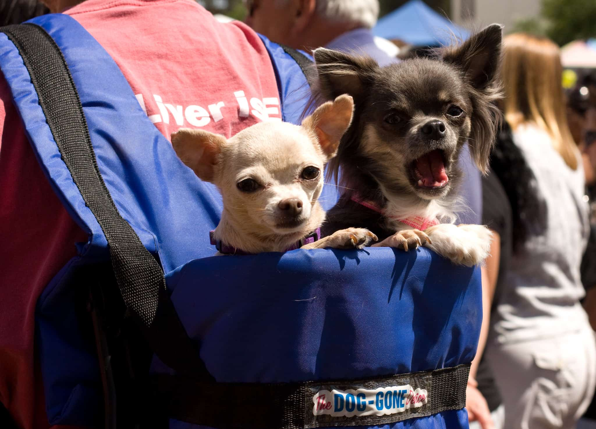 dogs in backpack