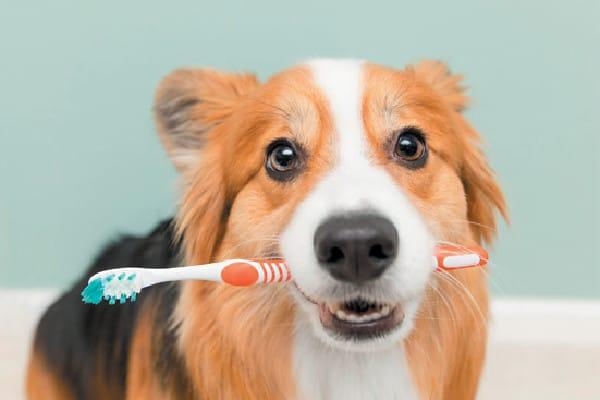 dog toothpaste