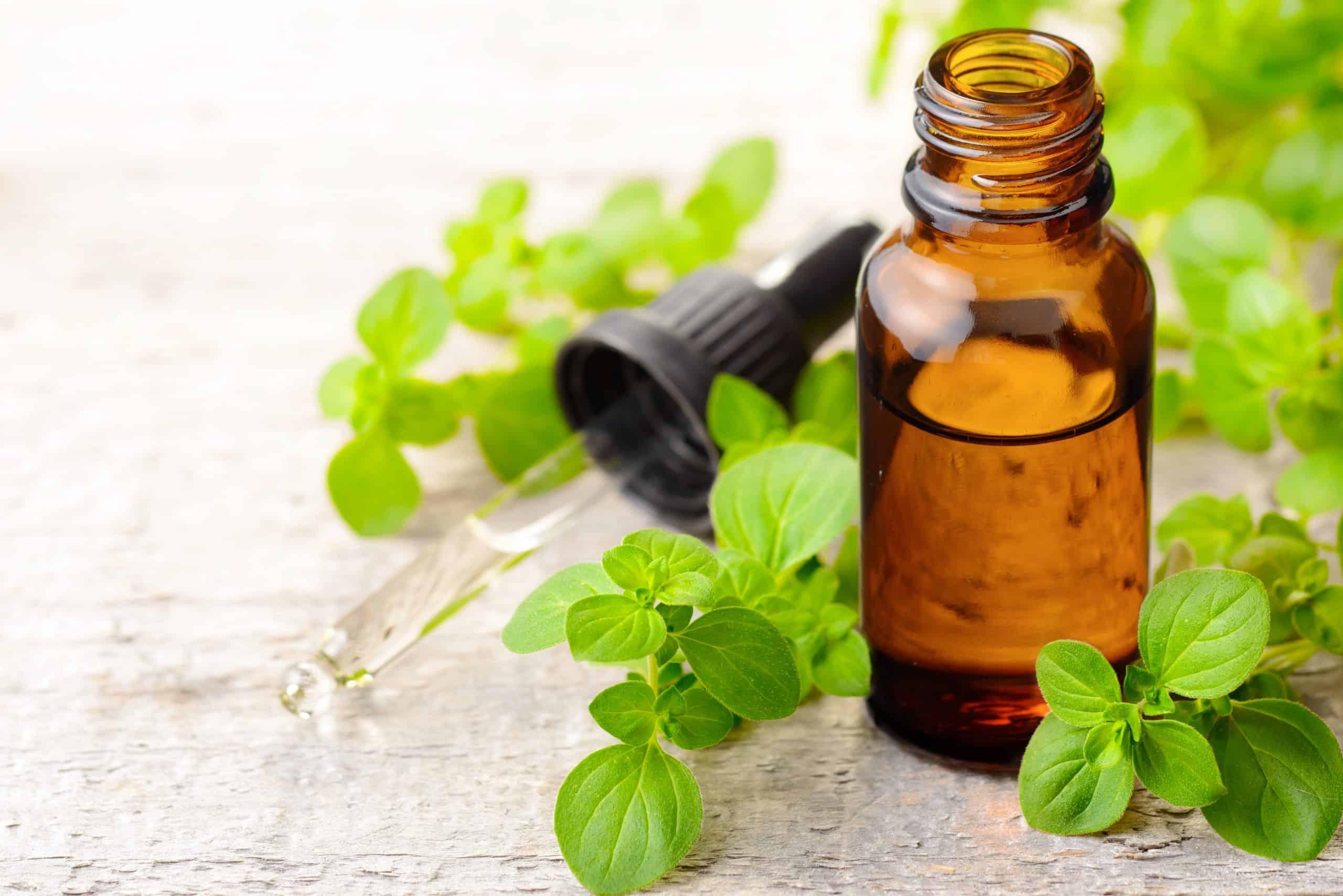 oregano oil for dogs natural antibiotic