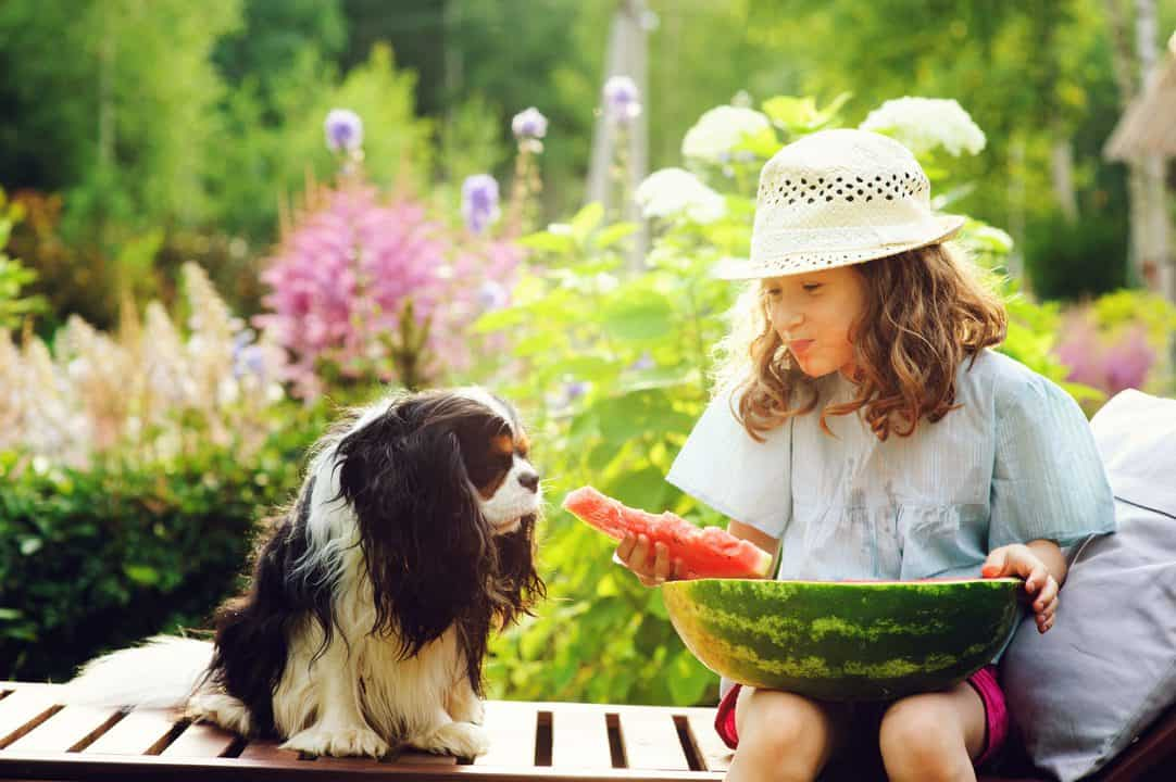 happy child sharing watermelon with her dog