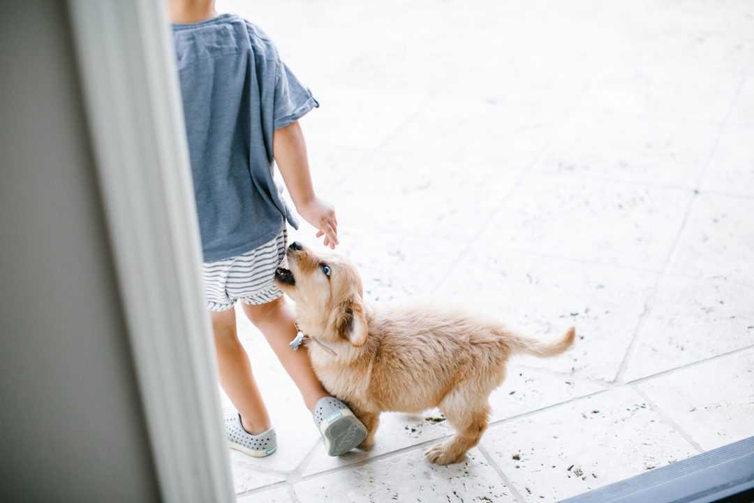 puppy biting boy's clothes